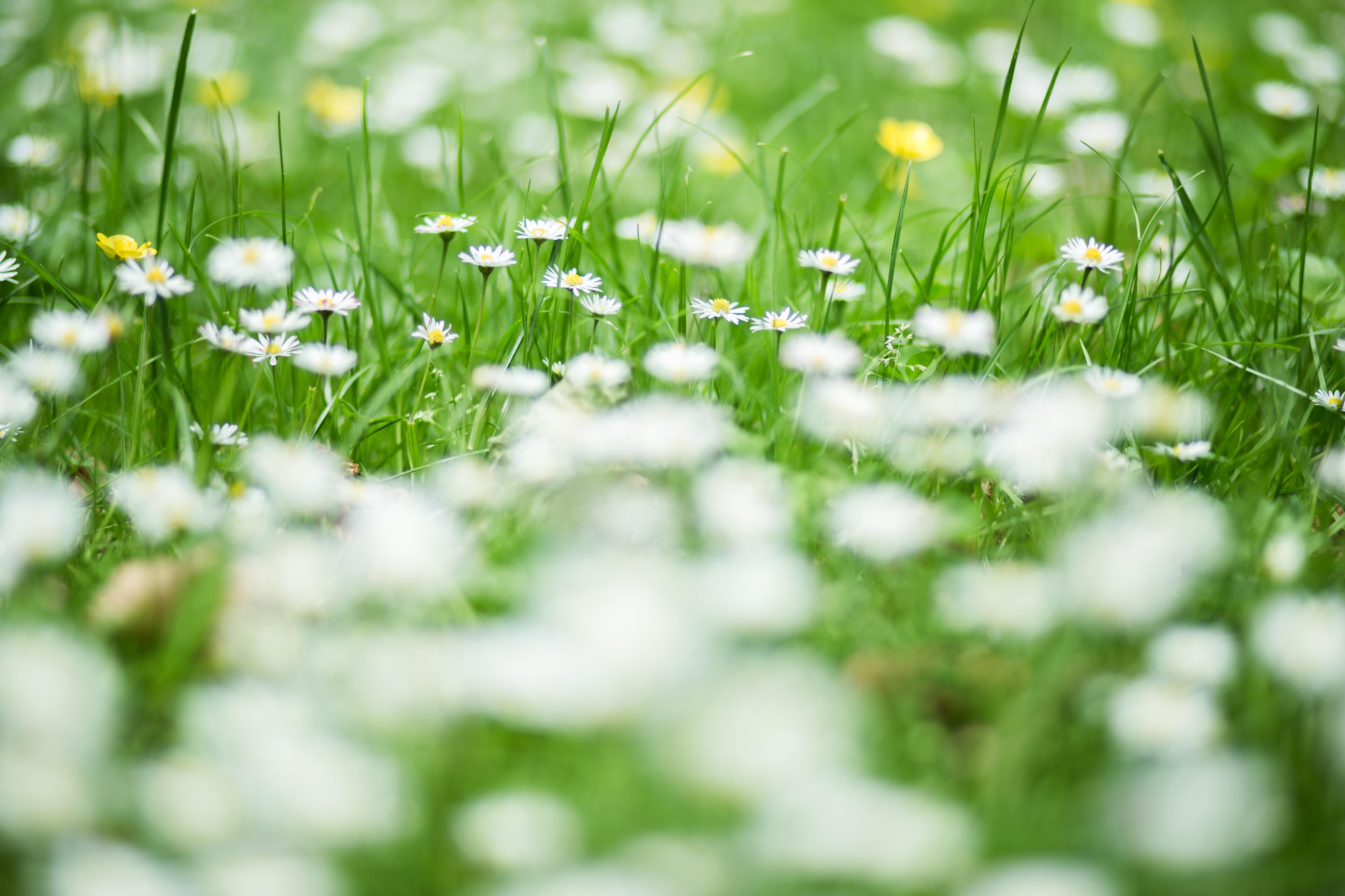 glyphosate wild flowers