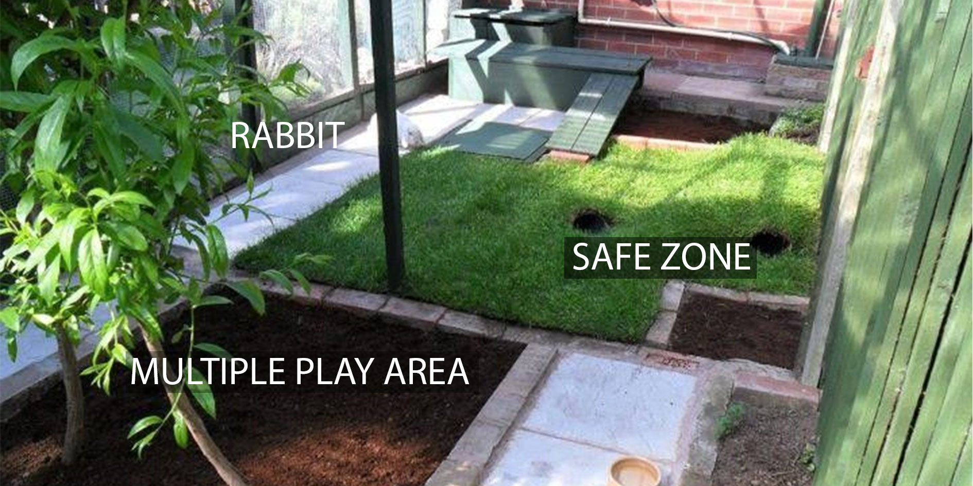 mspca-vegan-pet-rabbit-safe-area