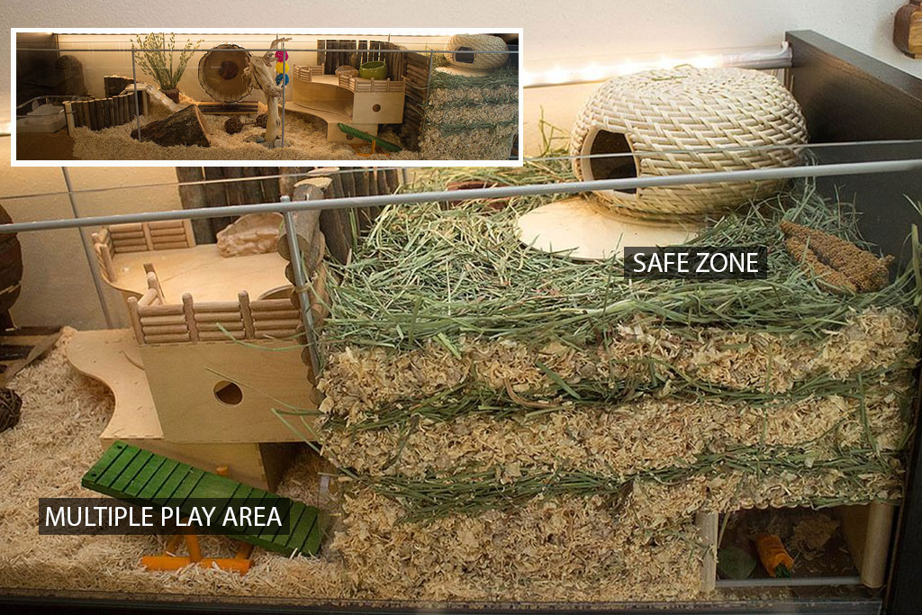 mspca-vegan-pet-safe-area