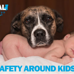 Animal Talk 03 – Safety around Kids (and pets)