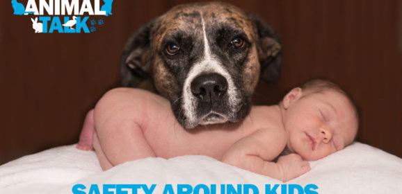 Animal Talk 03 – Safety around Kids (and pets)