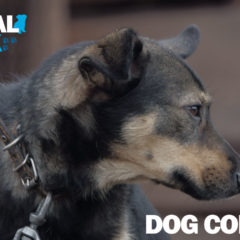 Animal Talk 05 – Dog Callars