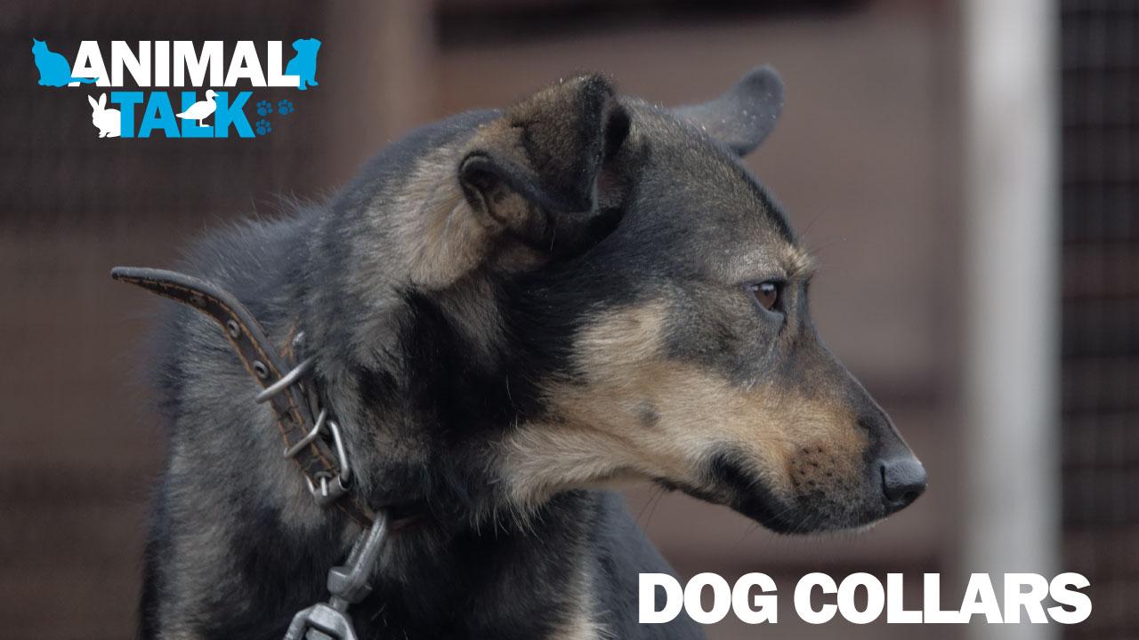 animal-talk-logo-screen-image