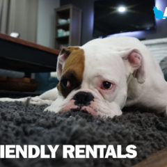 Animal Talk 04 – Pet friendly rentals