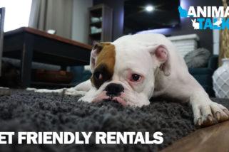 Animal Talk 04 – Pet friendly rentals