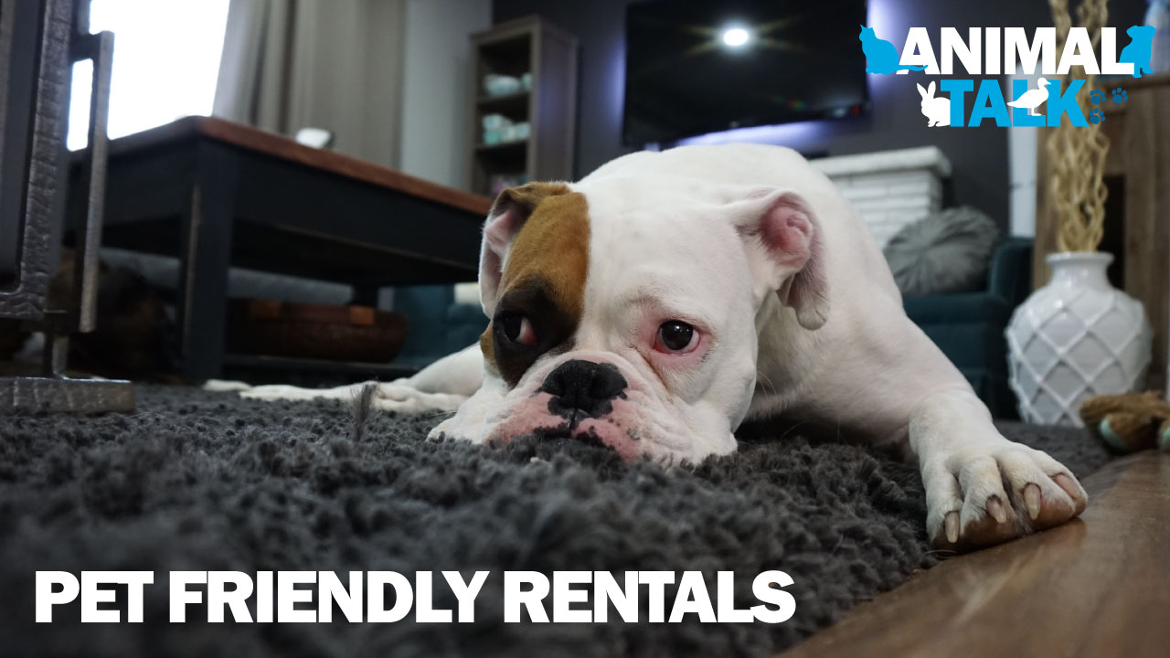 pet-friendly-rentals