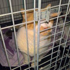 Animal Talk 09 – Cat Rescue