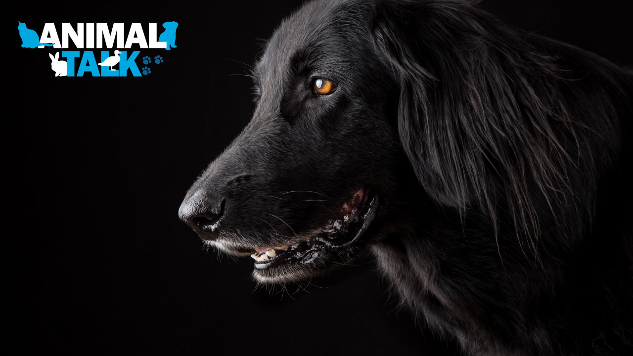 adopting a dog MSPCA