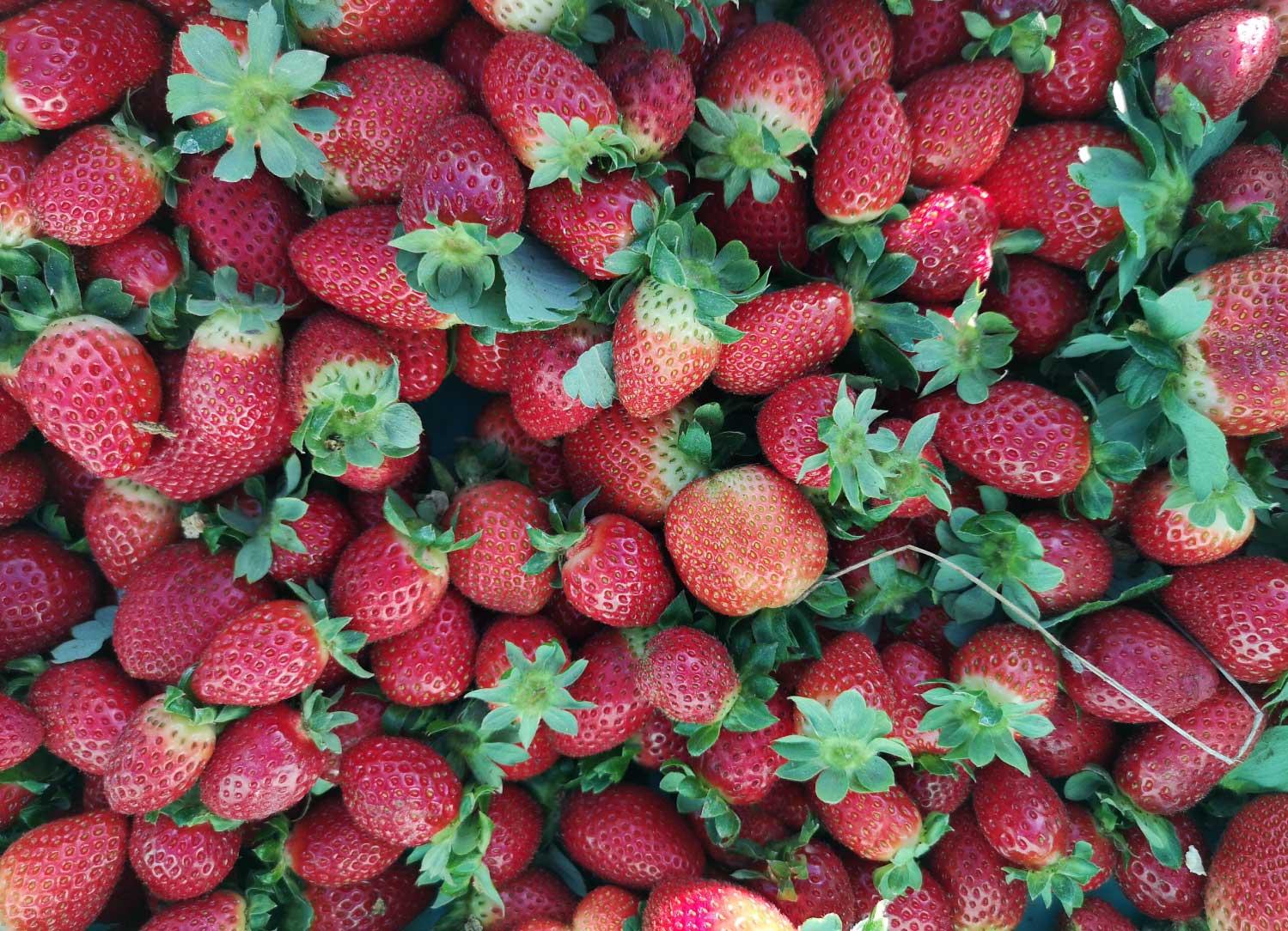 strawberries-fresh-malta-7-health-benefits-mgarr