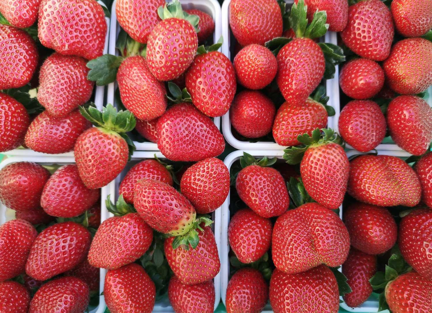 strawberries-fresh-malta-7-health-benefits