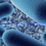The importance of Probiotics for good health